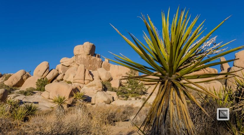 USA - California - Joshua national park-2