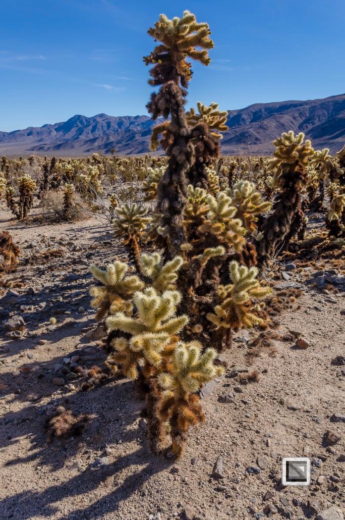 USA - California - Joshua national park-21