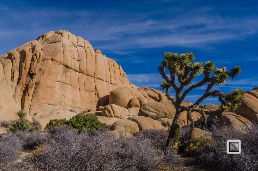 USA - California - Joshua national park-25