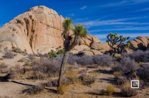 USA - California - Joshua national park-33