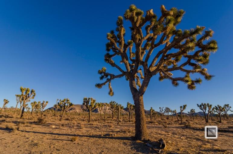 USA - California - Joshua national park-3