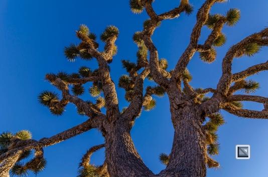 USA - California - Joshua national park-4