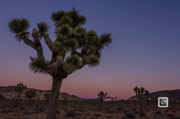 USA - California - Joshua national park-7
