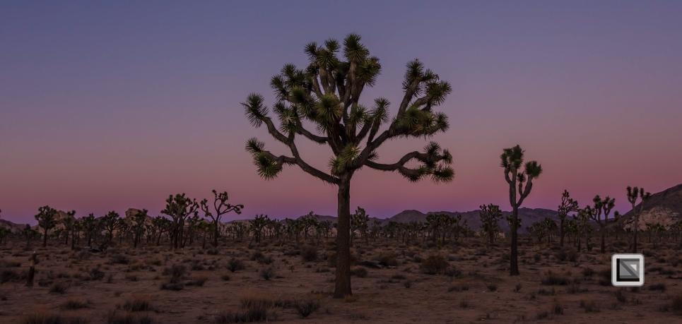 USA - California - Joshua national park-8