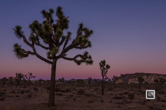 USA - California - Joshua national park-9