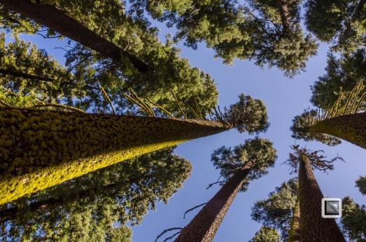 USA California - Yosemite National Park-12