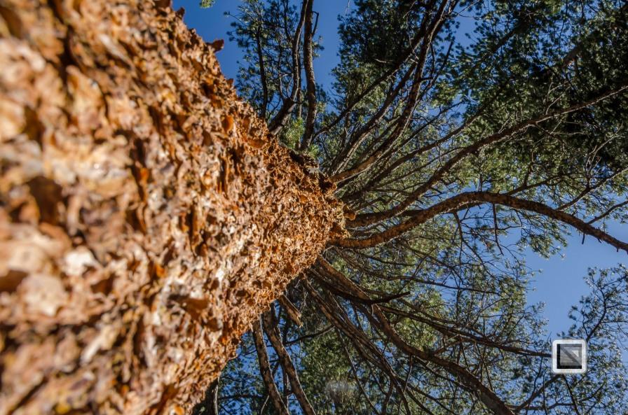 USA California - Yosemite National Park-4