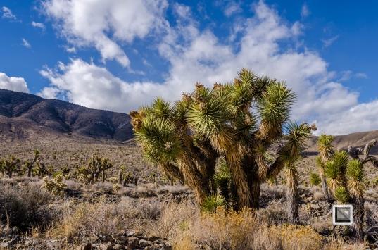 USA - Nevada - Death Valley-48
