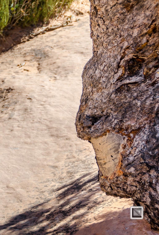 USA - Utah - Arches National Park-24