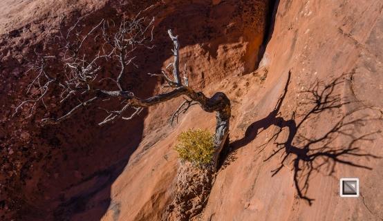 USA - Utah - Arches National Park-33