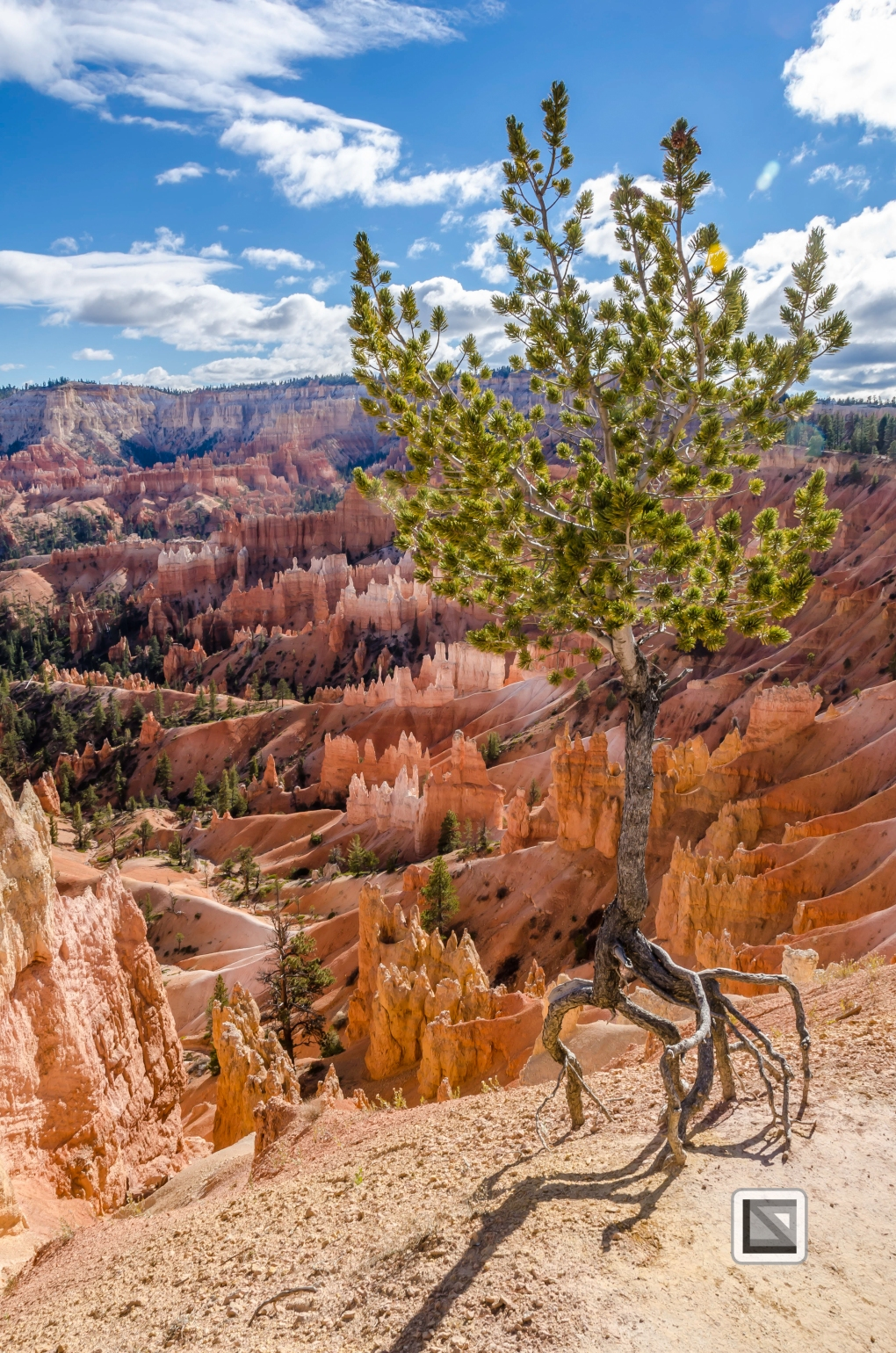 USA - Utah - Bryce Canyon-26