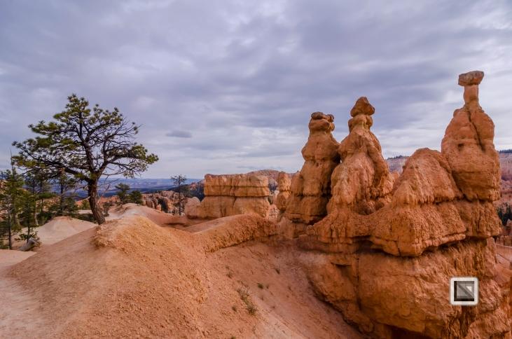 USA - Utah - Bryce Canyon-34