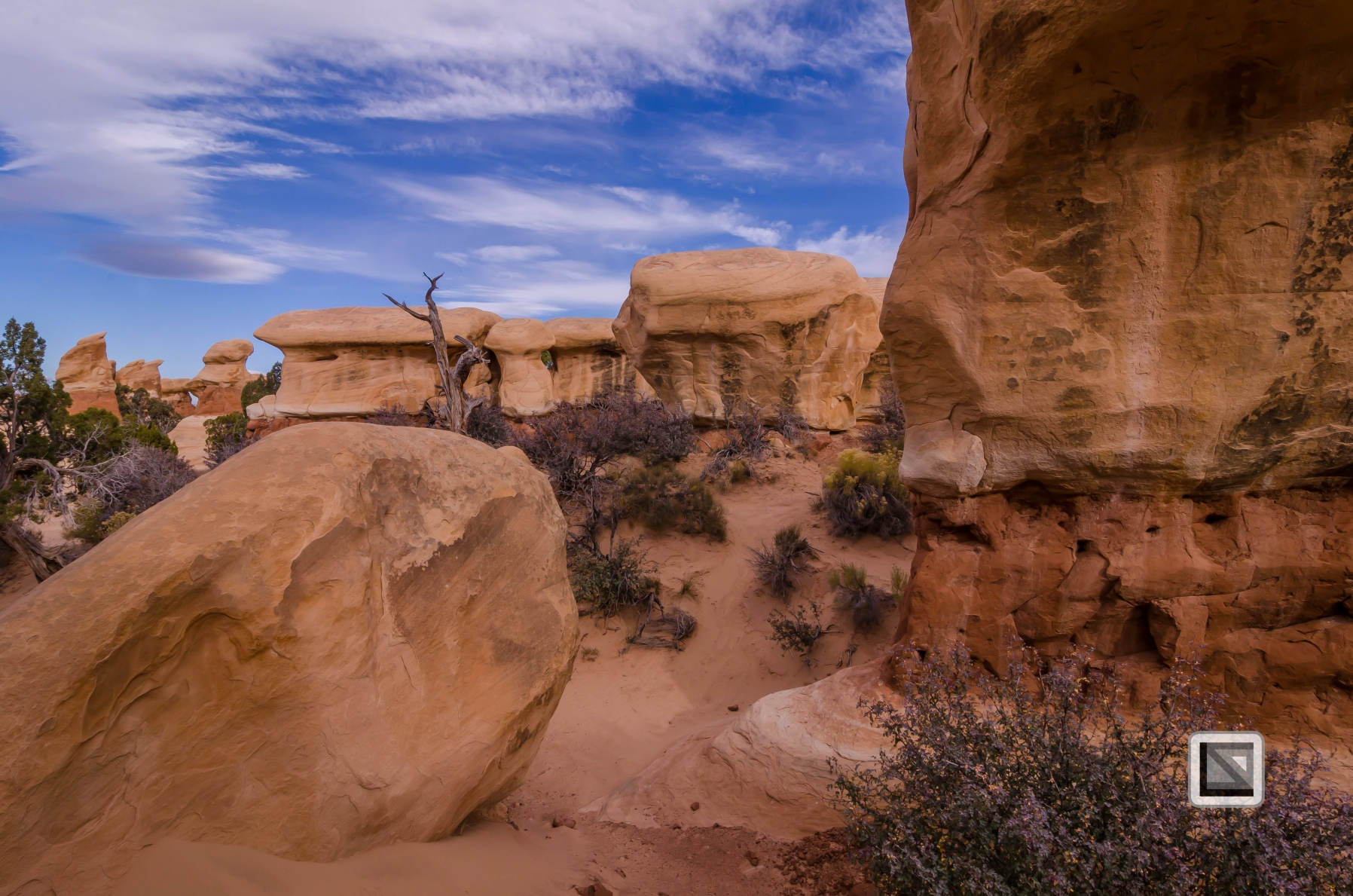 USA - Utah - Grand Staircase Escalante-25