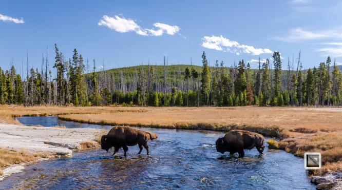 USA - Wyoming - Yellowstone National Park-105