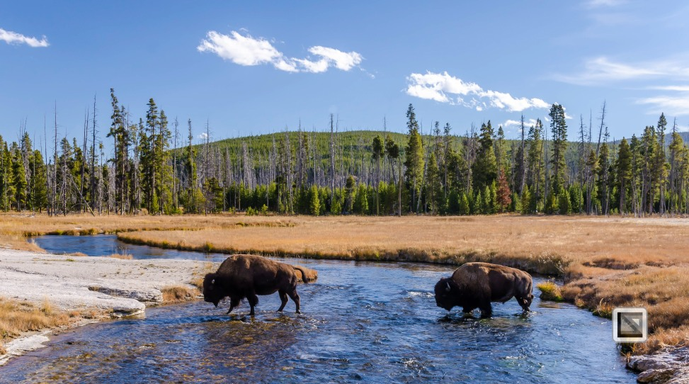 USA - Wyoming - Yellowstone National Park-105