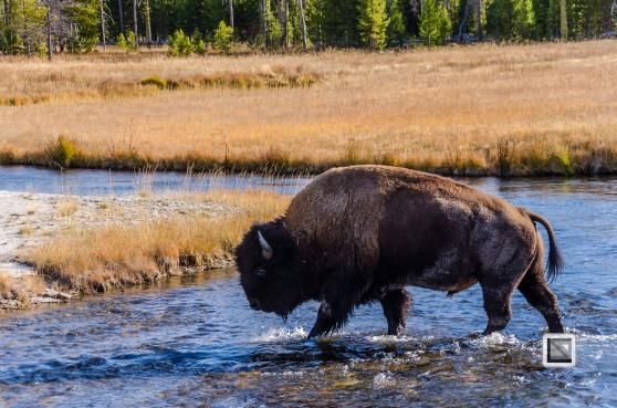 USA - Wyoming - Yellowstone National Park-106