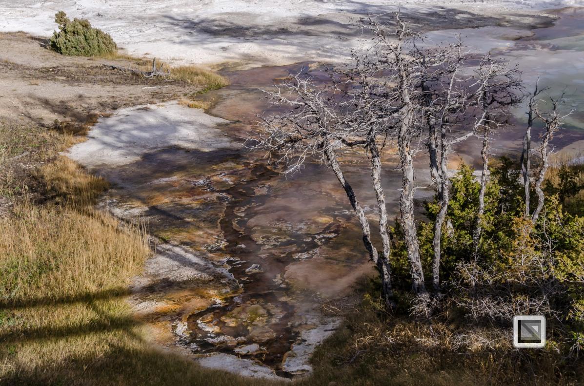 USA - Wyoming - Yellowstone National Park-11