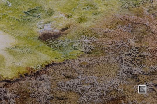 USA - Wyoming - Yellowstone National Park-16