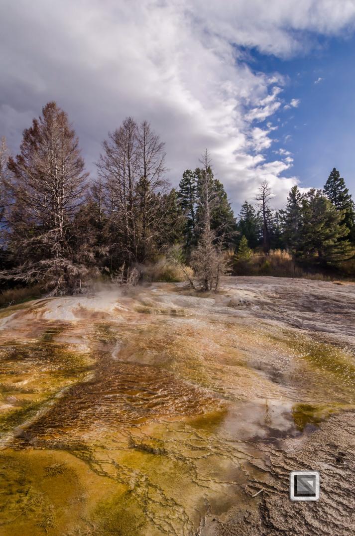 USA - Wyoming - Yellowstone National Park-23