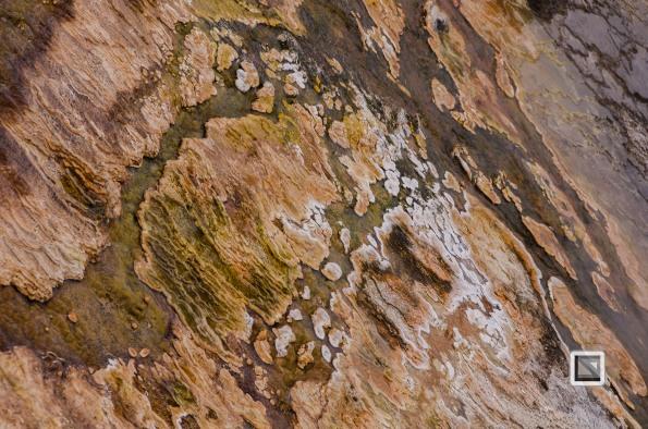 USA - Wyoming - Yellowstone National Park-28