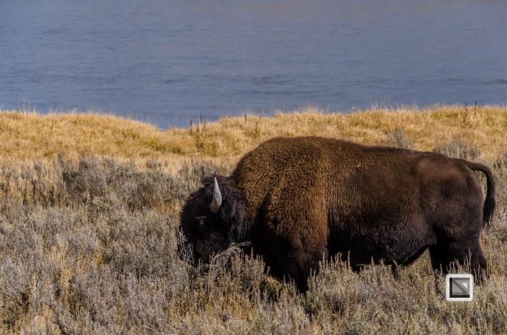 USA - Wyoming - Yellowstone National Park-4