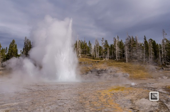 USA - Wyoming - Yellowstone National Park-45