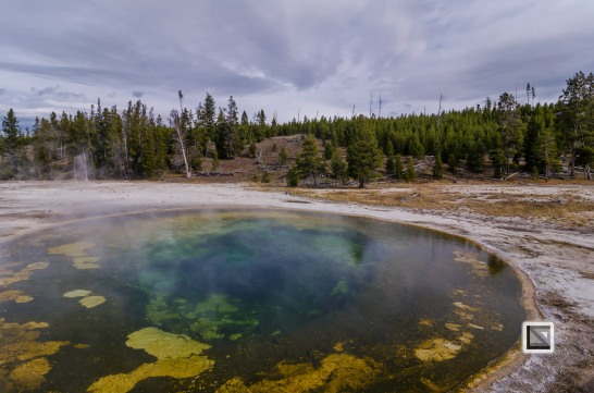 USA - Wyoming - Yellowstone National Park-49