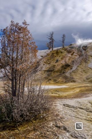 USA - Wyoming - Yellowstone National Park-6