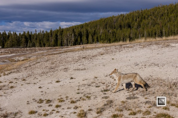 USA - Wyoming - Yellowstone National Park-71