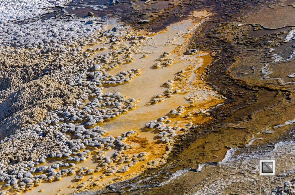 USA - Wyoming - Yellowstone National Park-74
