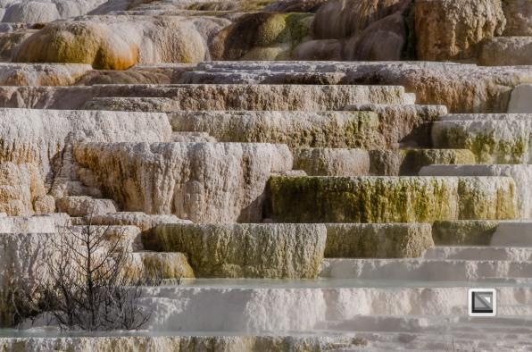 USA - Wyoming - Yellowstone National Park-8