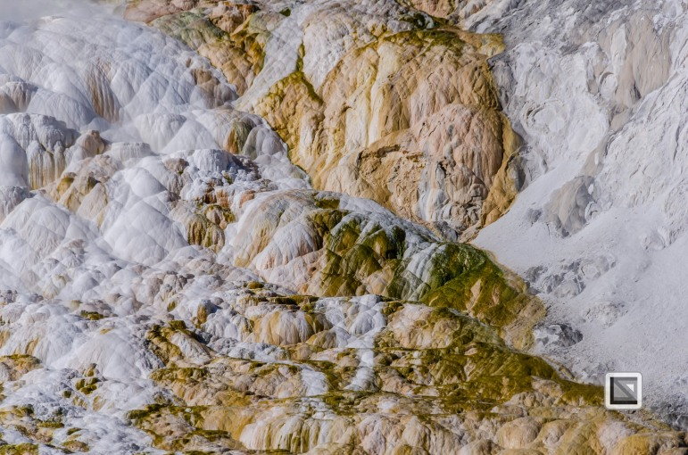 USA - Wyoming - Yellowstone National Park-96