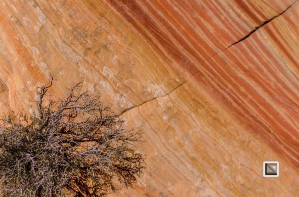 USA - Arizona - Vermillon Cliffs-34