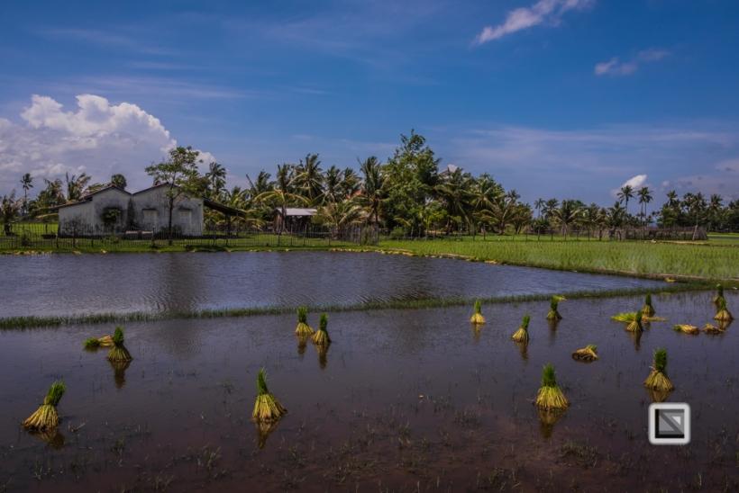Kampot-145