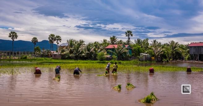 Kampot-187