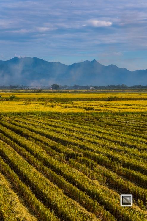 Da_Nang_Area-Vietnam-37