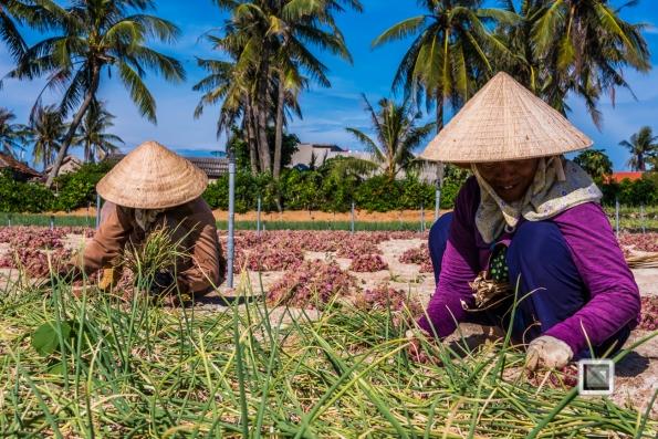 Ly_Son-Vietnam (172 von 197)