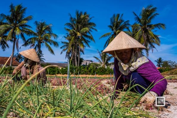 Ly_Son-Vietnam (176 von 197)