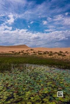 Mui Ne Sand Dunes - Vietnam-49