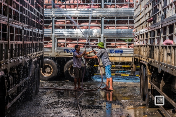 Pig_Transport_Shower-Vietnam (9 von 10)-2