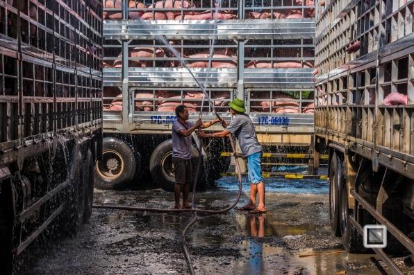 Pig_Transport_Shower-Vietnam (9 von 10)-2
