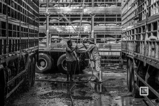 Pig_Transport_Shower-Vietnam (9 von 10)