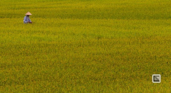 rice_fields-Vietnam (14 von 15)
