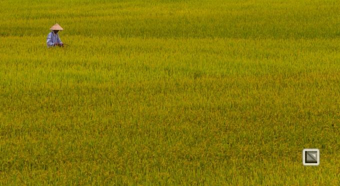 rice_fields-Vietnam (14 von 15)