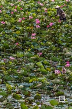 Rice_Fields-Vietnam (6 von 21)