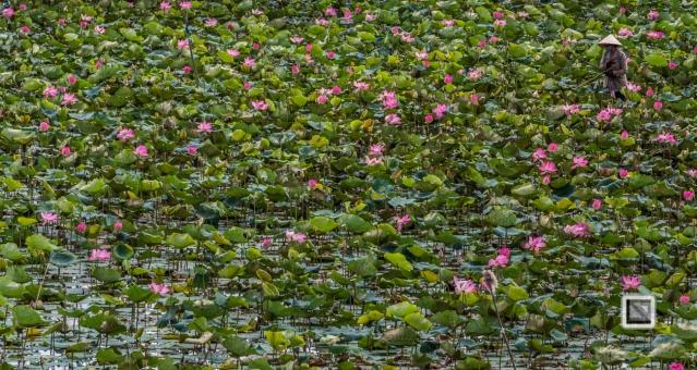 Rice_Fields-Vietnam (7 von 21)
