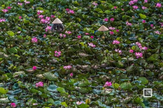Rice_Fields-Vietnam (8 von 21)