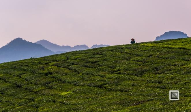 vietnam-moc_chau-son_la_province-31
