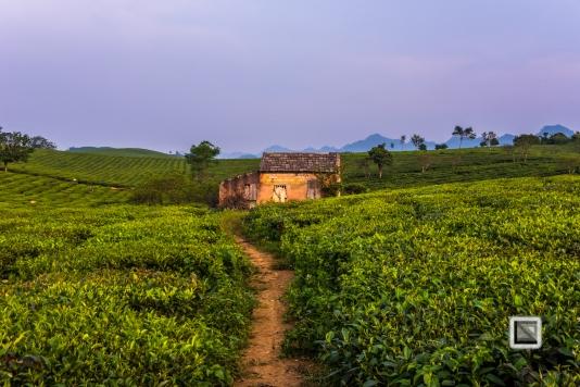 vietnam-moc_chau-son_la_province-73