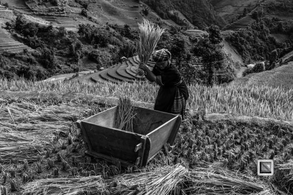 vietnam-mu_cang_chai-yen_bai_province-144-2